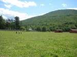 WFAS land below the Catskills